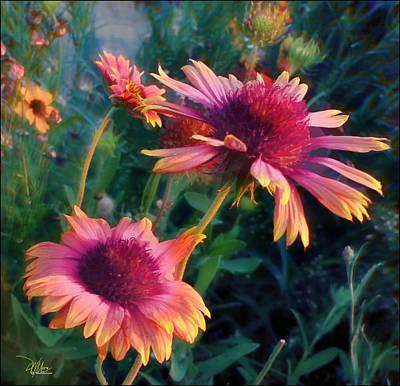 Blanket Flowers At Sunset Poster