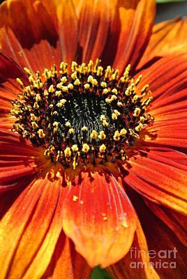 Blazing Sunflower Poster