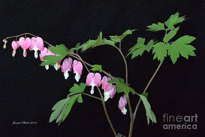 Poster featuring the photograph Bleeding Hearts 2 by Jeannie Rhode