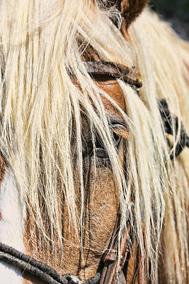 Blond Horse Poster