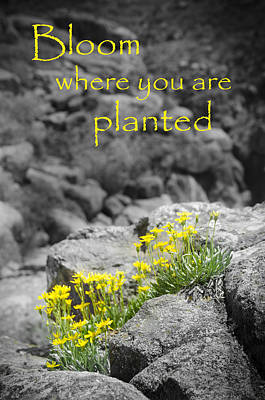 Bloom Where You Are Planted Poster by Debbie Karnes