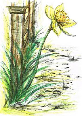 Blooming Daffodil Poster by Teresa White