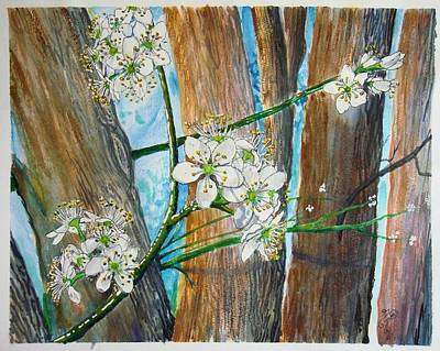 Blooms Of The Cleaveland Pear Poster