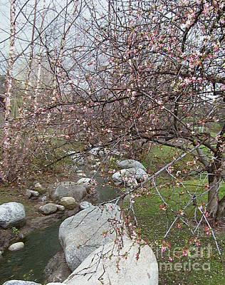 Blossom Brook Poster