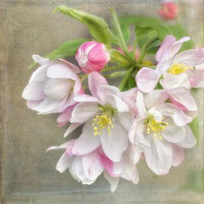 Blossom Festival Poster by Kim Hojnacki