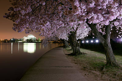 Blossom Night Fever Poster by Bernard Chen