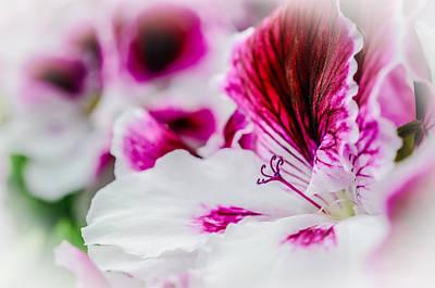 Blossom Of Geranium Poster by Annette Hanl