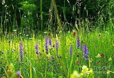 Poster featuring the photograph Blossom Summer Meadow by Kennerth and Birgitta Kullman