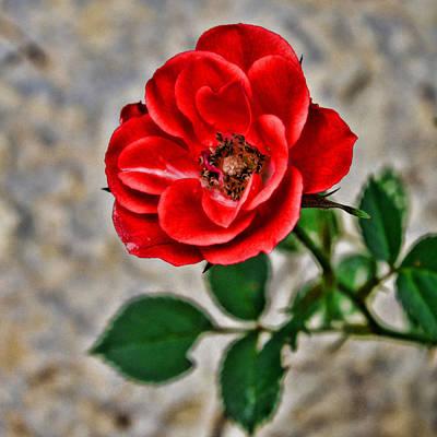 Blossom Poster by Tom Druin