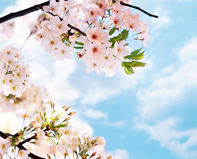 Blossoms Against Sky, Selective Focus Poster by Panoramic Images