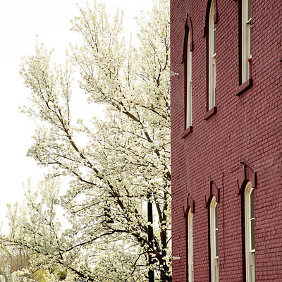 Poster featuring the photograph Blossoms And Brick by Courtney Webster