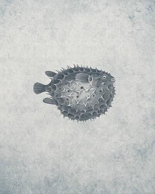 Blowfish - Nautical Design Poster