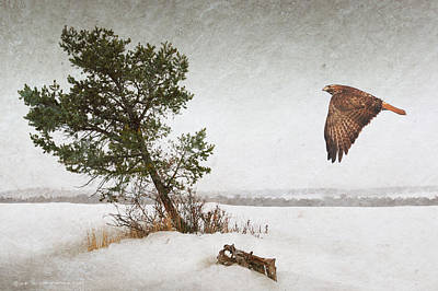 Blowing Winterscape Redtail Hawk Poster by R christopher Vest