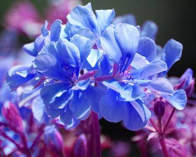Poster featuring the photograph Blue And Purple Flowers by Matt Harang