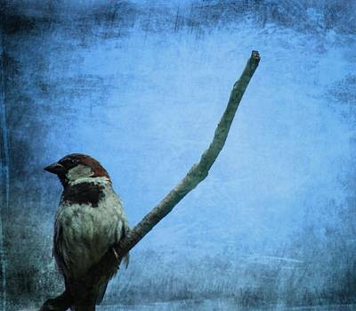 Sparrow On Blue Poster by Dan Sproul