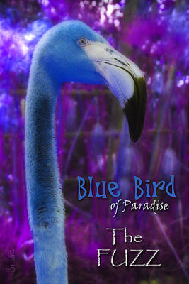 Poster featuring the photograph Blue Bird Of Paradise - The Fuzz by Barbara MacPhail