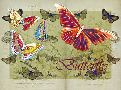 Blue Butterfly - Orange On Green - S02a Poster