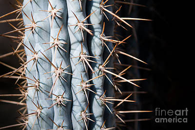 Blue Cactus Poster by John Wadleigh