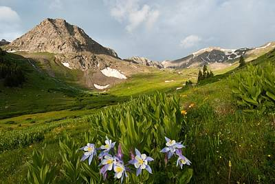 Handie's Peak And Blue Columbine On A Summer Morning Poster