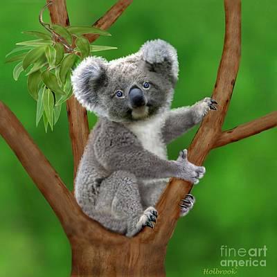 Blue-eyed Baby Koala Poster by Glenn Holbrook