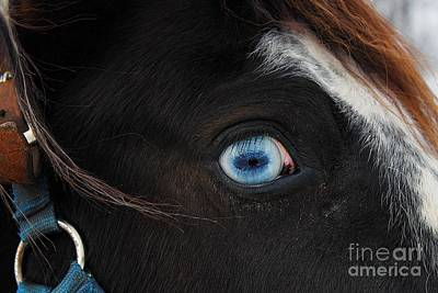 Blue Eyed Horse Poster