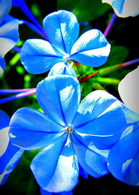 Blue Flower Poster by David Mckinney