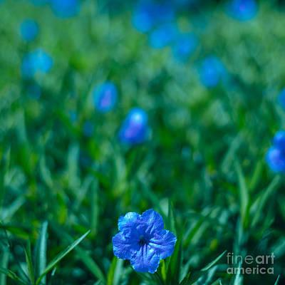 Blue Flower Poster by Julian Cook