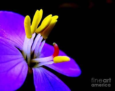 Blue Flower Poster by Surendra Silva