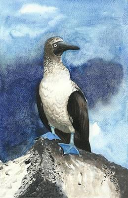 Blue Footed Booby Bird On A Rock Poster by Shweta  Mahajan