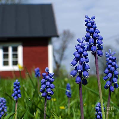 Poster featuring the photograph Blue Garden Flowers by Kennerth and Birgitta Kullman