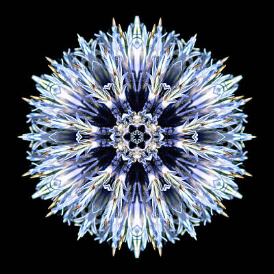 Poster featuring the photograph Blue Globe Thistle Flower Mandala by David J Bookbinder
