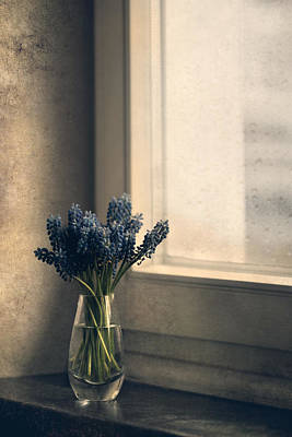 Blue Grape Hyacinth Flowers At The Window Poster by Jaroslaw Blaminsky