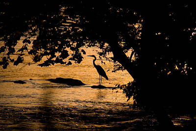 Blue Heron At Sunset Poster