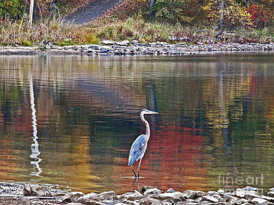 Blue Heron In Autumn Poster by Joan McArthur