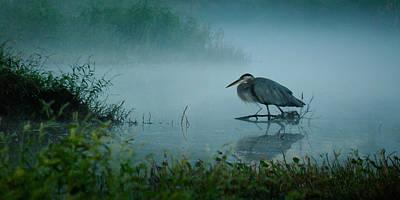 Blue Heron Morning Poster