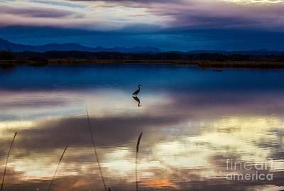Blue Heron Sun Set Poster