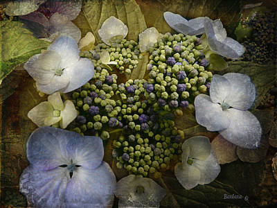 Poster featuring the photograph Blue Hydrangea by Barbara Orenya