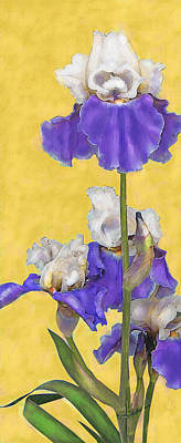 Poster featuring the digital art Blue Iris On Gold by Jane Schnetlage