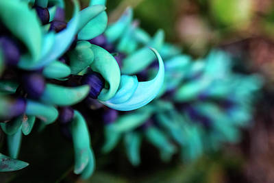 Blue Jade Plant With Purple Flowers Poster by Scott Mead