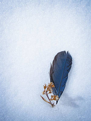 Blue Jay Feather On Snow Poster
