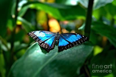 Blue Lit Butterfly Poster