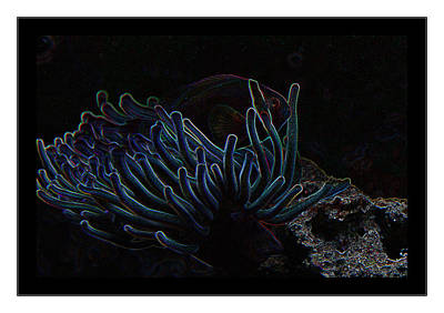 Blue Magic Light Fish  Poster
