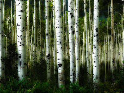 Poster featuring the photograph Blue Mood Aspens I by Lanita Williams