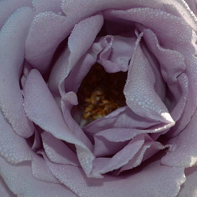 Blue Moon Rose 1.2 Poster by Cheryl Miller