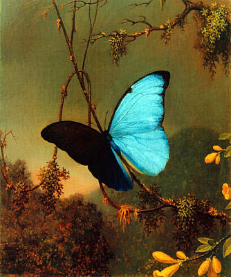 Poster featuring the painting Blue Morpho Butterfly by Martin Johnson Heade
