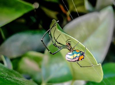 Poster featuring the photograph Blue Orbweaver by TK Goforth