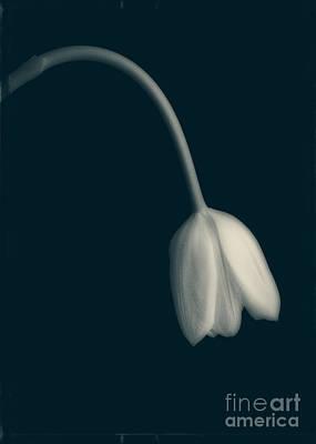 Blue Period Poster by Edward Fielding