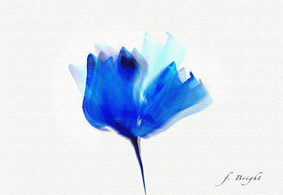 Blue Poppy Silouette Mixed Media  Poster