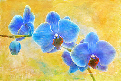 Blue Sapphire Orchid Poster