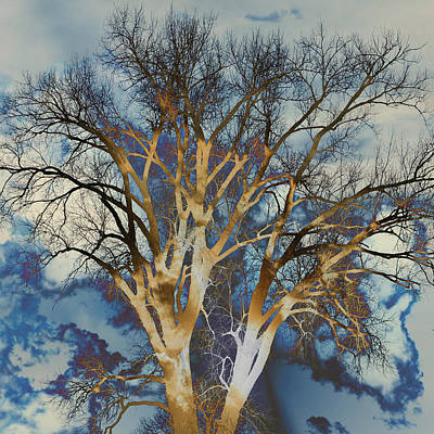 Blue Sky Tree Poster by Marty Koch